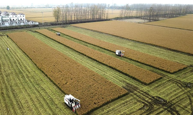 Farmers harvest rice in Huai'an, E China's Jiangsu