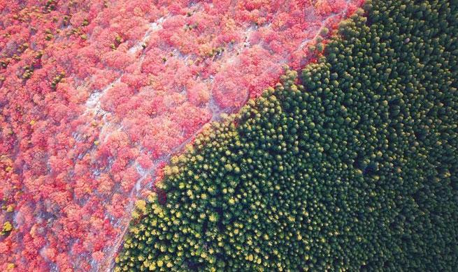 Xinhua drone photos of year