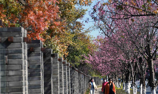 Blossoming flowers seen in Kunming, southwest China's Yunnan