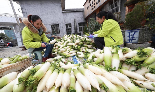 White radish planting helps villagers increase incomes in China's Guizhou