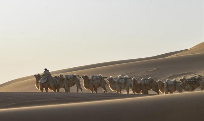 Highlights of 2nd camel Nadam fair in Araxan, N China's Inner Mongolia