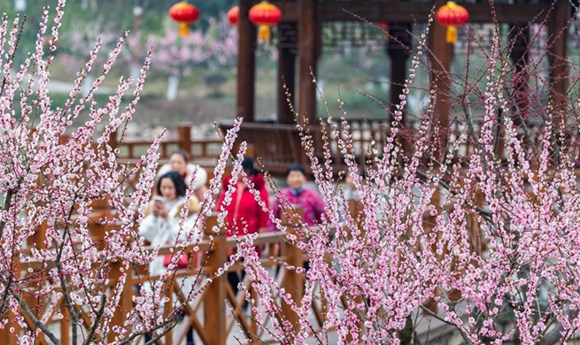 Flowers blossom during Spring Festival holiday across China