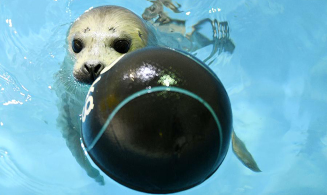 In pics: new-born seal cub at Harbin Polarland
