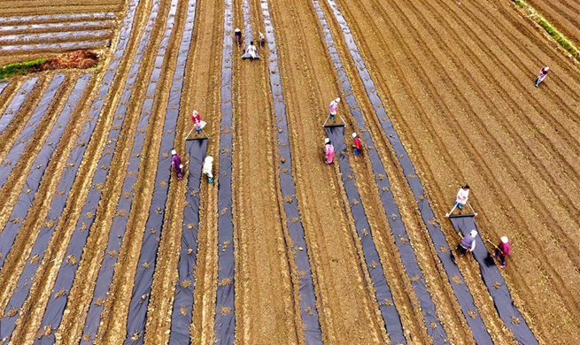 People across China begin to engage in farming in early spring