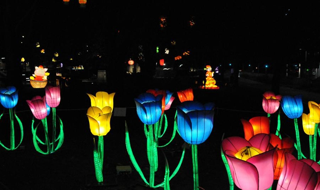 Lantern festival lights up New Zealand's second largest city