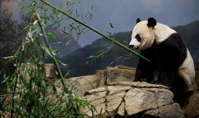 U.S. national zoo holds housewarming event inside giant panda house
