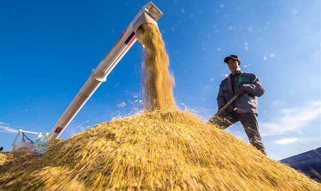 Implementation of rural vitalization strategy accelerated across China