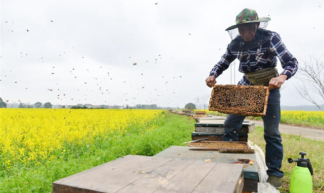 Bee farmers collect honey in China's Hunan Province