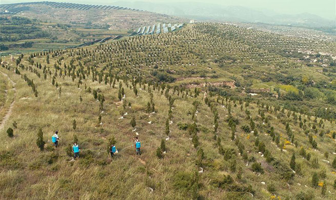 China's reforestation efforts significantly impact global carbon emission reduction