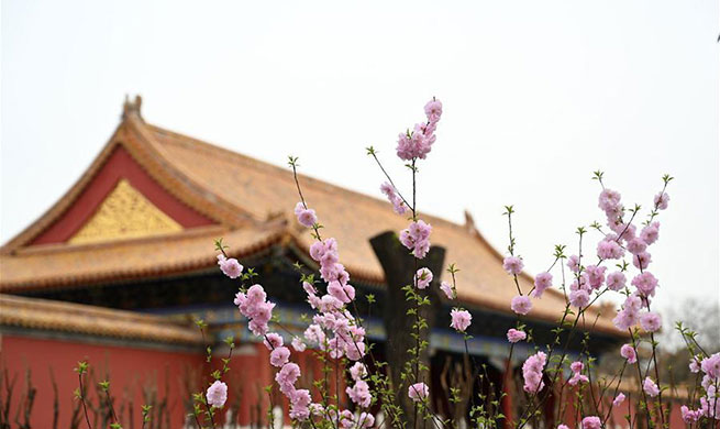 In pics: flowers bloom in Palace Museum in Beijing, China