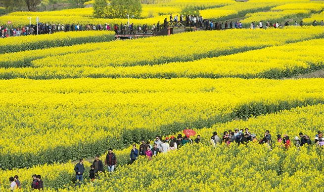 Tourists enjoy cole flowers in E China's Jiangsu