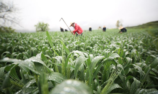 In pics: farm work across China