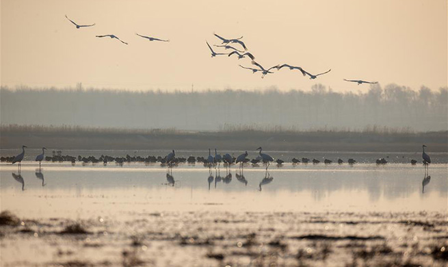 Nature reserve in China's Jilin greets peak season for migrant birds to return to north
