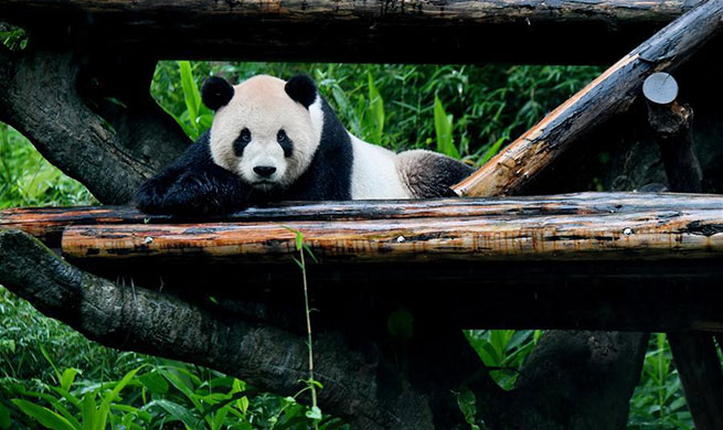 Two giant pandas at Taipei Zoo attract tourists