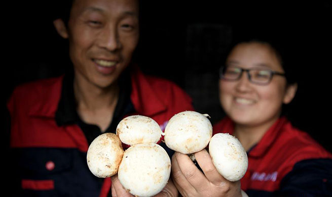 Pic story: villagers shake off poverty by cultivating mushroom in China's Anhui