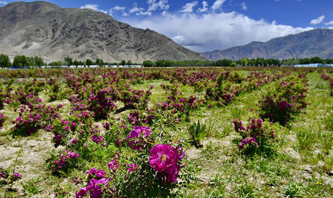 In pics: a rural tourist destination in China's Tibet