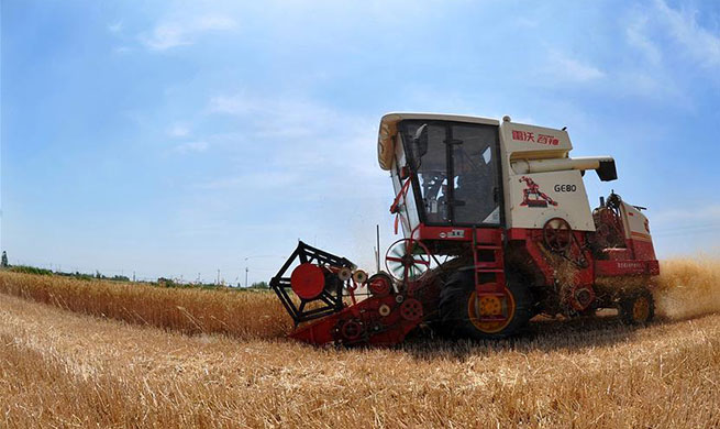 Wheat enters harvest season in China