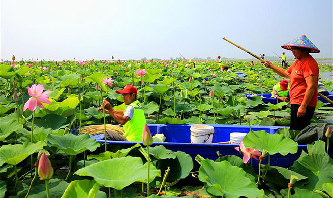 Sihong County authorities promote aquatic agricultural products plantation