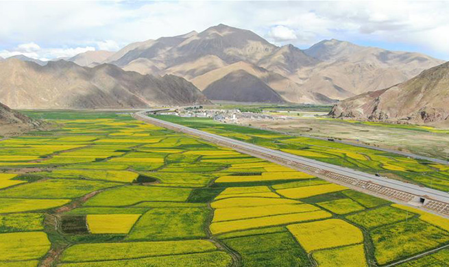 Scenery of cole flowers in Deqing Town, China's Tibet