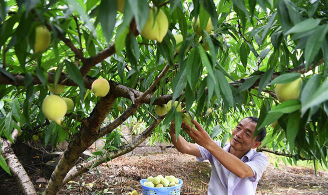 Peach, blueberry planting industries boost rural economy in China's Chongqing