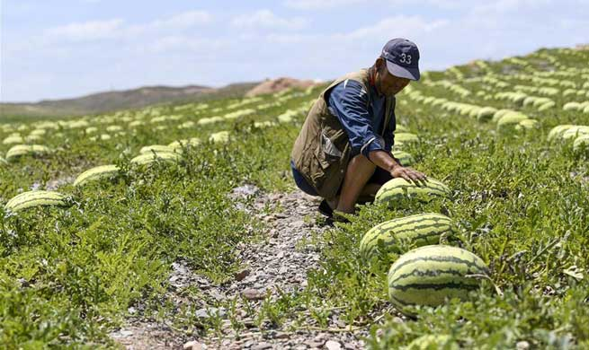 Farmers develop fruit industry to increase their income in northwest China town