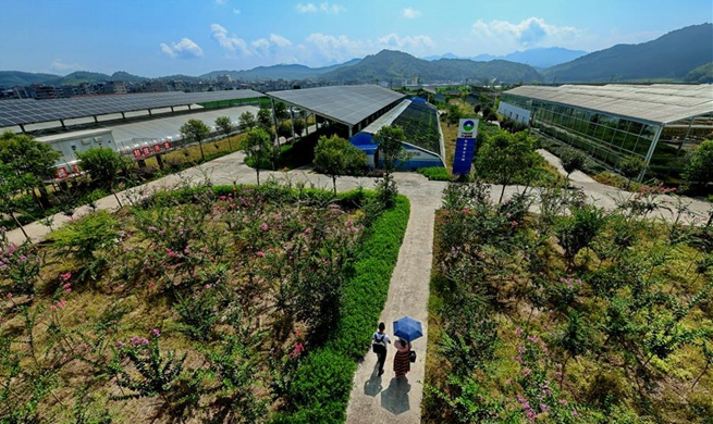 New way of poverty alleviation brings benefits to people in town of Fujian