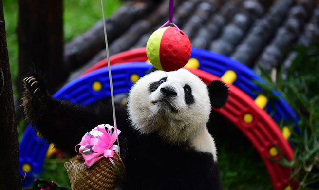 Birthday party held for giant panda in Changchun, China's Jilin