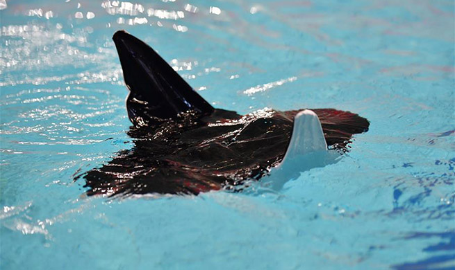 Chinese researchers develope biomimetic robot in shape of manta ray in Shaanxi