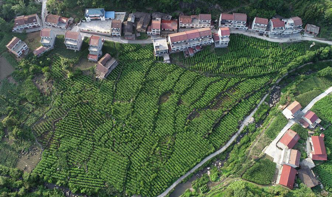 Ankang City in NW China sees rapid growth of eco-friendly industries
