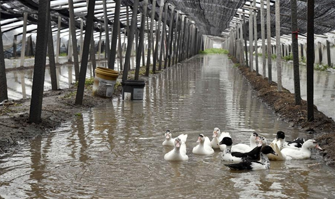 Vegetable greenhouses flooded due to rainstorms brought by typhoon Lekima in China's Shandong