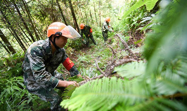 Forest rangers protect forest around water sources of Ganjiang River