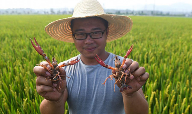 Zhejiang's Donglin Town develops agricultural polyculture system for better benefits