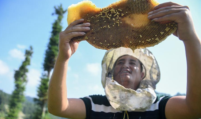 Beekeeper in China's Hunan benefits from targeted poverty alleviation project