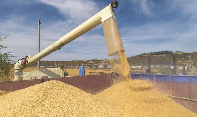 Rice harvested in NE China's Jilin