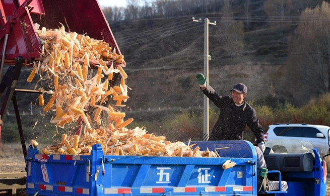 Villagers busy harvesting crops before temperature drops in Hohhot, N China