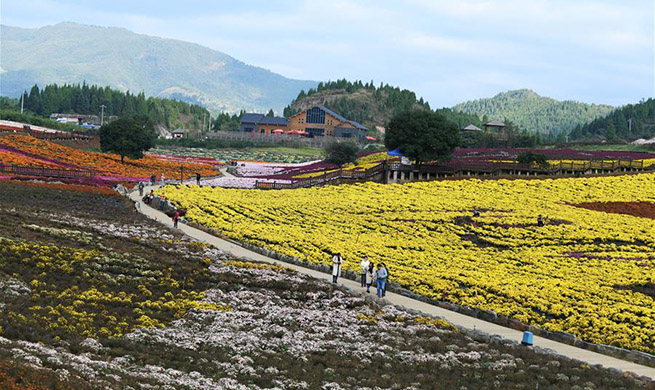 Tourists enjoy chrysanthemum flowers in China's Guizhou