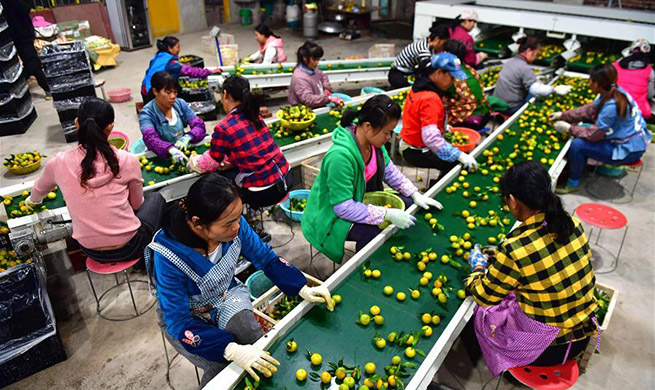 Tangerine industry in China's Guangxi creates job opportunities for people in poverty