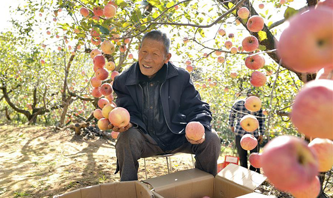 Villager makes efforts to develop agriculture with support of gov't policies in Henan