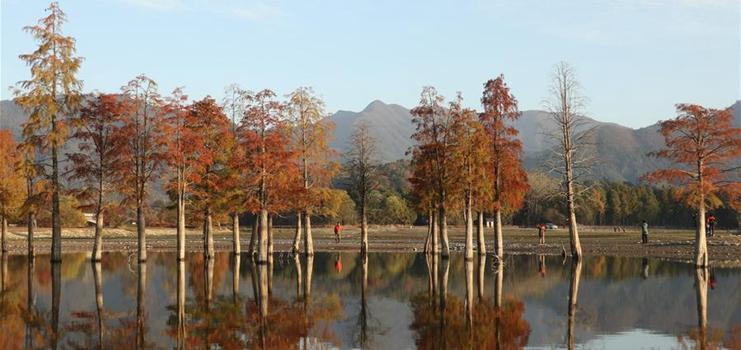 Winter scenery of Qishu lake in E China's Anhui