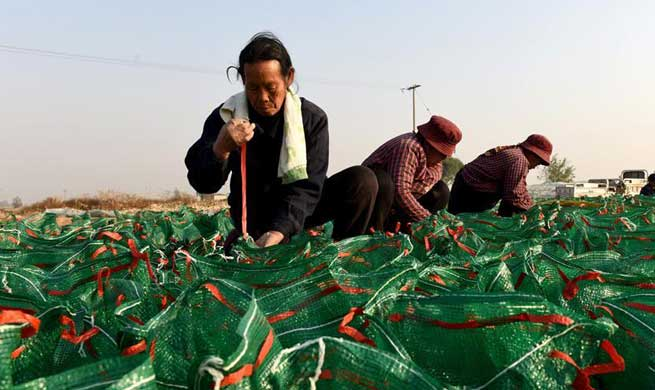 Planting of traditional Chinese herbal medicines helps boost local farmers' income in China's Hebei
