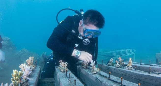 Researchers dedicated to coral rehabilitation in Celukan Bawang, Indonesia