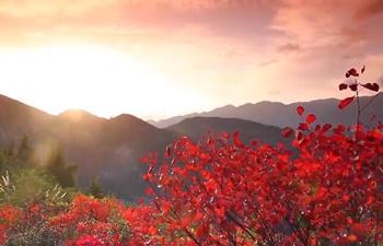 Red leaves blanket Wushan County in Chongqing