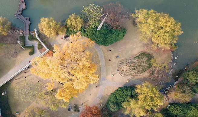 In pics: 1,200-year-old ginkgo tree in Jiading District of Shanghai