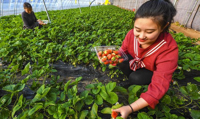 Ecological garden helps to develop rural tourism in Wuqiang, China's Hebei