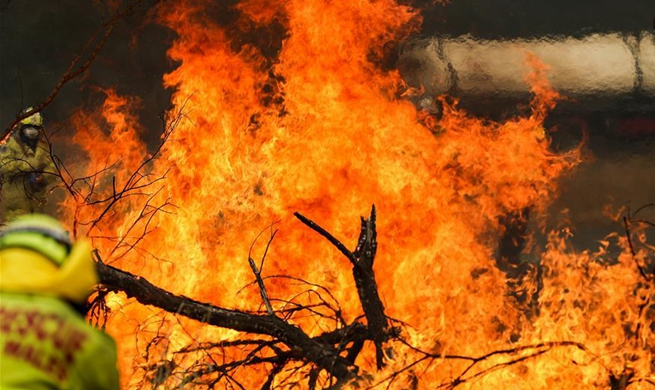 Australian government launches National Bushfire Recovery Agency