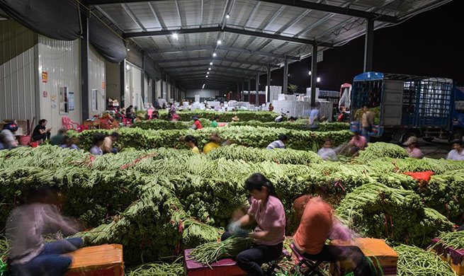In pics: vegetable production hub in south China's Hainan