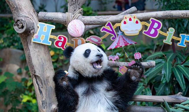 "Giant Panda ""Yi Yi"" celebrates second birthday in Malaysia"