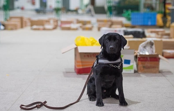 "In pics: sniffer dog ""Lufei"""