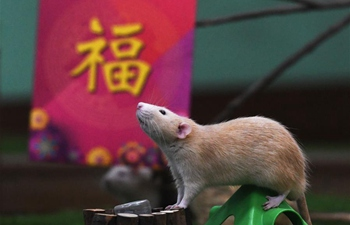 Singapore Zoo of Wildlife Reserves Singapore holds event to welcome Year of Rat
