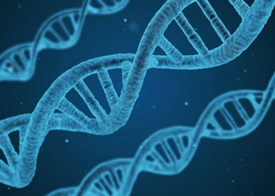 """""""Jumping genes"""" help stabilize DNA folding patterns: study"""